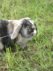 Beauftragung Tierkommunikation
